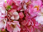 Hestercombe Roses by KateHodges