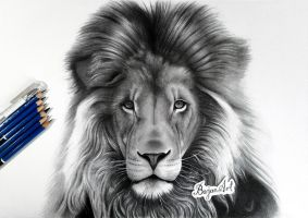 Lion drawing by Bajan-Art
