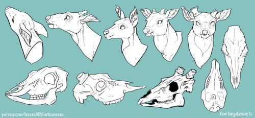 Deer Head and Skull Reference by CourtneysConcepts