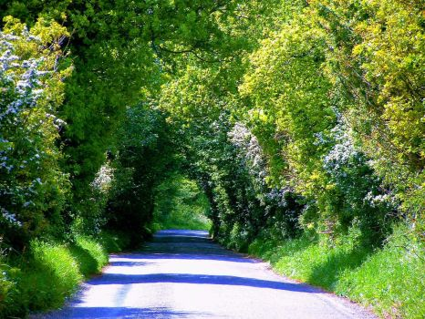 Tree Tunnel by Its-Only-Art