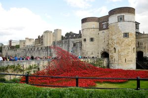 Tower poppies 1 - London 2014 by wildplaces