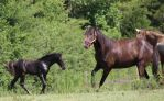 Multiple Horses 44 by MountainViewStock