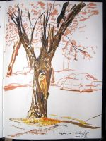 2007-02 Sketchbook: 05 by monking