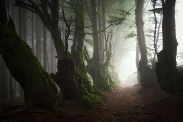 Elder Souls by FlorentCourty
