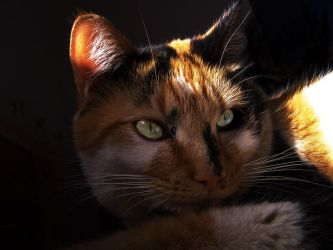 Another Cat Picture 2 by churra