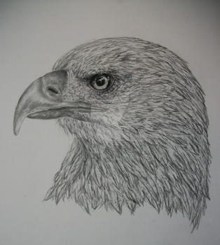 Eagle Head Drawing by miamary123456