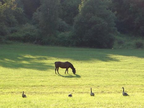 Horse and Geese by seir