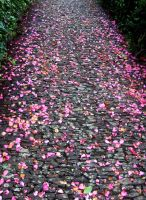 Petal Way by Temerice