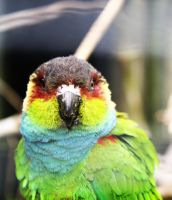 Parrot by cstm