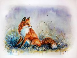 Little fox by csillabold