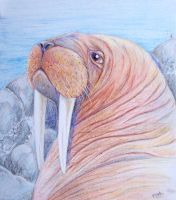 The Walrus by jackal-god