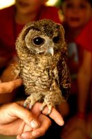 An Owl by photo-exile
