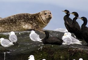 4 Shags and a Seal by fraughtuk