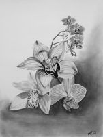 Orchids by Derfblue
