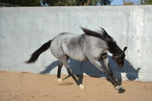 DWP FREE HORSE STOCK 131 by DancesWithPonies