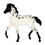 N3295 Padro Foal Design for horses0101 by casinuba