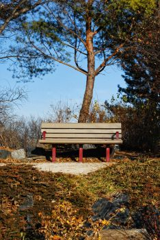 Park Bench by midnightstouchSTOCK