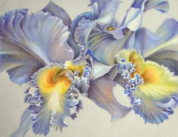Orchid by ElianaIle