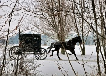 Amish Buggy in Winter by screamingmeme