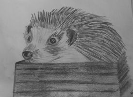 Hedgehog by agnese9