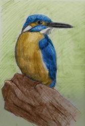 KingFisher coloured by jablar
