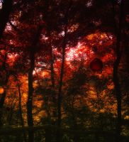Forest of Dreams by Deorsa