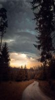 Late in the Woods by Cormocodran15