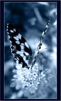 Butterfly by donia