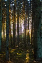 Enchanted Forest by SaraJArts