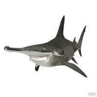 The Depth - HammerHead Shark by MrUncleBingo