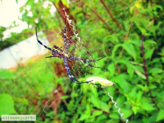 Web of Life by labellaxiaira