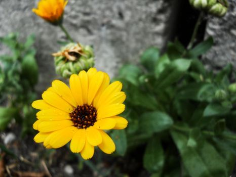Yellow Flower by TheTaier