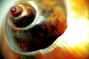 macro fresh water snail by stranger26
