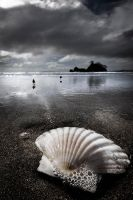 the shell by spako