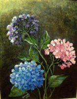 THREE HYDRANGEAS by Hydrangeas