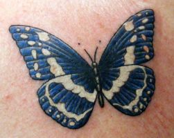 David's Butterfly: chest by zradkins