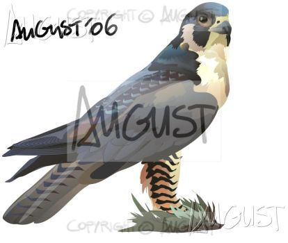 falcon_schoolwork by AugustAnna
