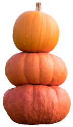 pumpkins 2 STOCK by AStoKo