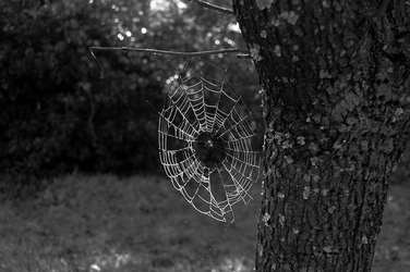 Morning Web by AnthonyMiller