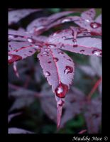 Drops of Jupitur by shutter-bug664