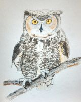 Horned Owl by armahillo