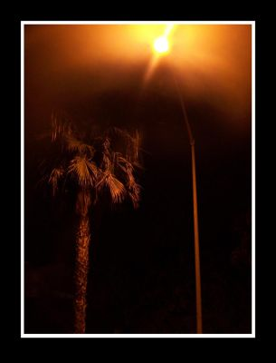 Palm Night by Pandora-Gold-Photo