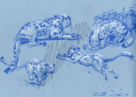 Animal Drawing Workshop Demo 1 by davidsdoodles