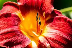More Stamens by ian-roberts