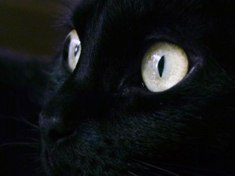 panther eyes by SailorMappy