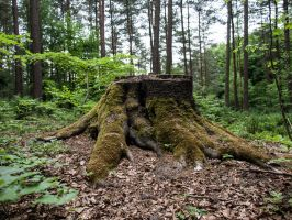 STOCK Stump by Inilein