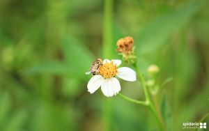 flower and bee by spiderio