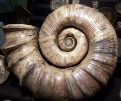 Ancient Nautilus by Mountaineer47