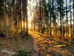 forest eve by Mittelfranke