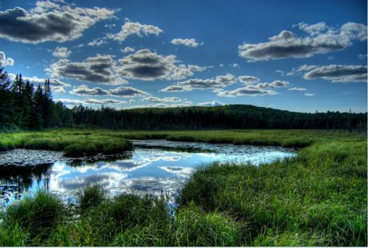 The Bog by sdave026